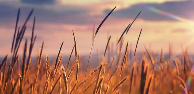 Buğday Vadeli İşlem Sözleşmeleri