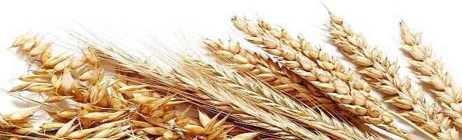 Buğday Yatırımı Yapmak