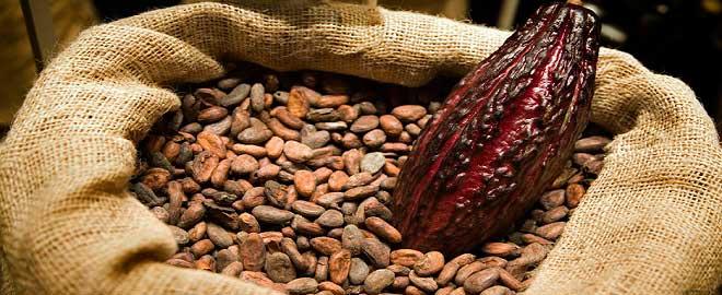 Kakao Yatırımı Yapmak