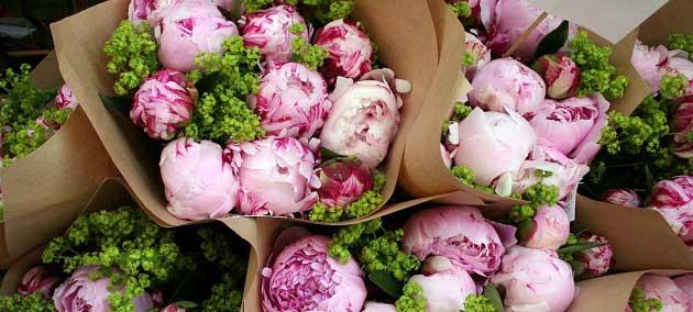 Çiçek Yetiştiriciliği Yapın